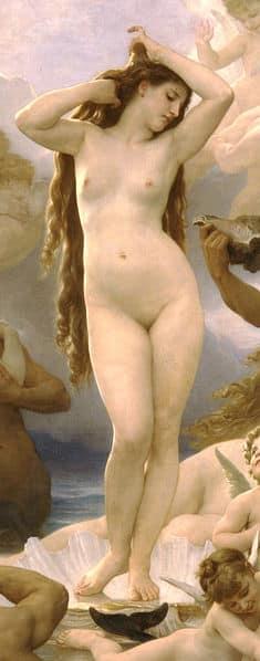 Weibliche Vulva
